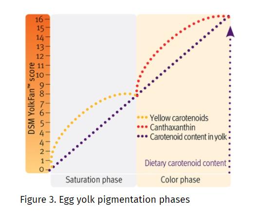 DSM CAROPHYLL Red 10% The Principle of Egg Yolk Pigmentation