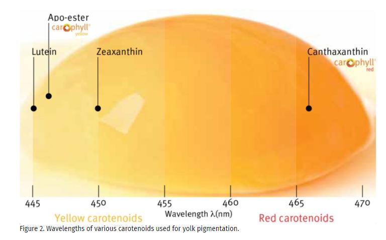 DSM CAROPHYLL Red 10% Factors Affecting Egg Yolk Pigmenting Efficiency - 2