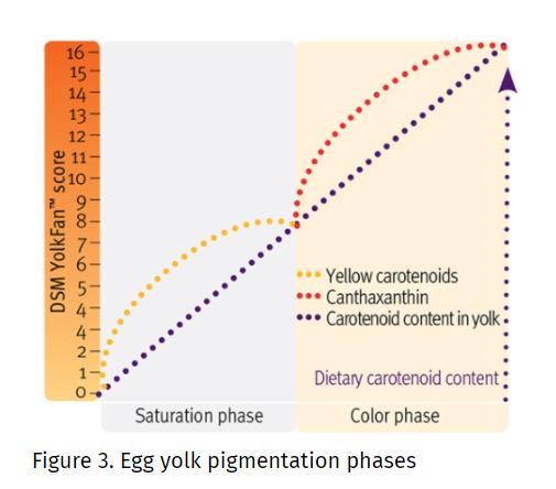DSM CAROPHYLL Yellow 10% The Principle of Egg Yolk Pigmentation - 1