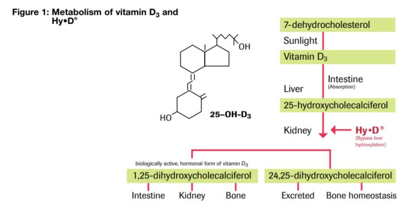 DSM Hy-D Vitamin D3 Metabolism - 1