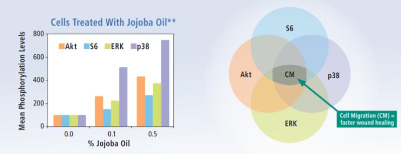 Vantage Personal Care DW Jojoba Colorless Efficacy Studies - 6