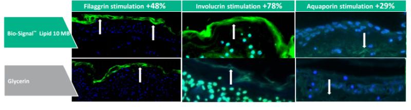 Vantage Personal Care Bio-Signal Lipid 10 MB Efficacy Studies - 1