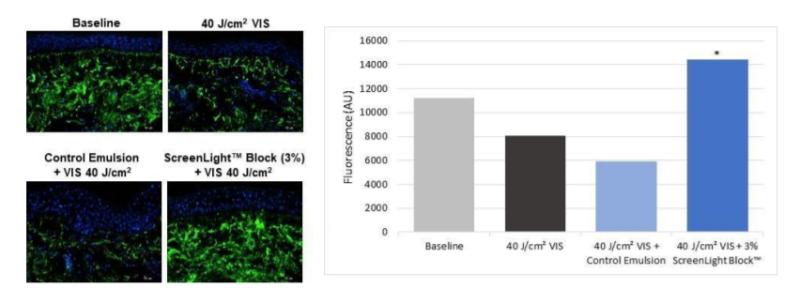 Lonza ScreenLight Block Efficacy test-Extracellular Matrix Structure and Organization - 1