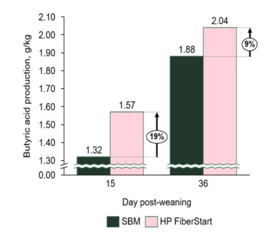 Hamlet Protein HP FiberStart Benefits of butyric acid