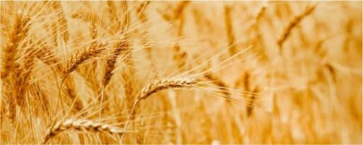 Heartland 75 Vital Wheat Gluten product card banner