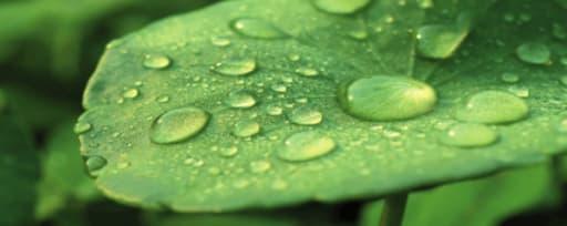 Greenpharma Organic Centella Asiatica Extract product card banner