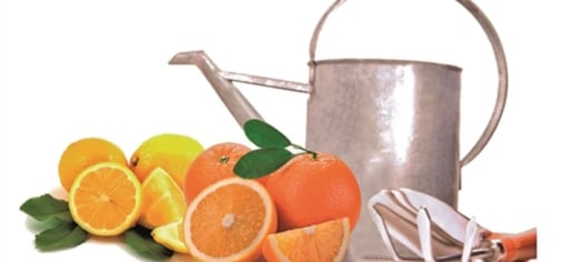 Cytofruit® Water Red Orange Bio 99% product card banner