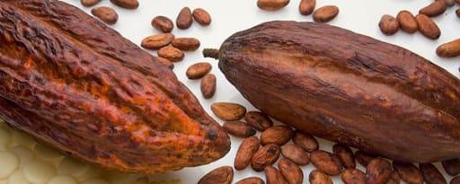 Henry Lamotte Oils Gmbh Henry Lamotte Oils-grapeseed Oil product card banner