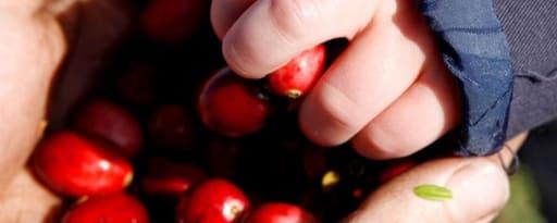 Crunchy Cranberries™ brand card banner