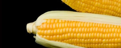 Primetime Nat Corn Flavor Wonf (Bd-10650) product card banner