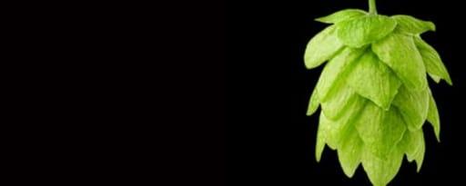 Primetime Nat Cascade Hop Flavor Wonf (Bd-10255) product card banner