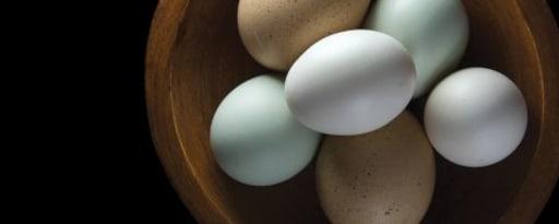 Primetime Nat Egg Yolk Flavor Type (Bd-10326) product card banner